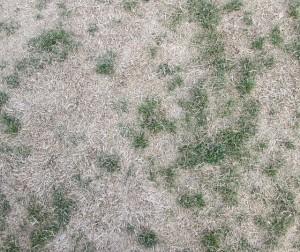 09.09.2015 - Pic - Dead Lawn