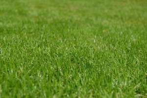 3 Ways to Protect Your Lawn this Winter