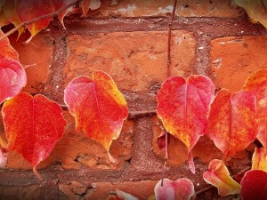 Parging Experts - Fall is the Best Time for Home Improvement Projects